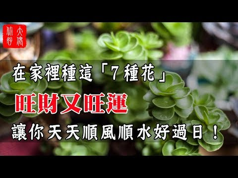 在家裡種這「7種花」,旺財又旺運,讓你天天順風順水好過日!