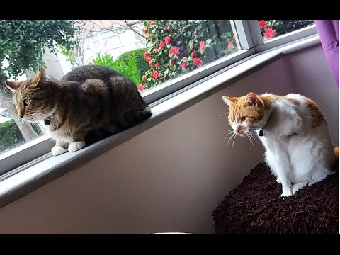 How fast can a cat run? 3 legs vs 4 legs