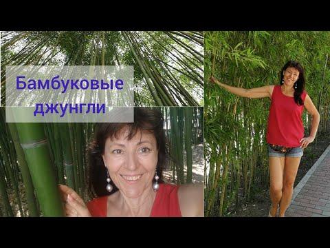 Бамбуковые джунгли. Санаторий Золотой Колос. Совушки. Лечение грибка.