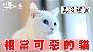 【豆漿與奴才】貓咪是很可惡的生物