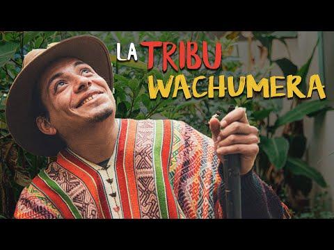 LA TRIBU WACHUMERA