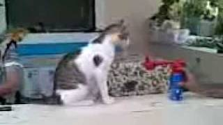 Нереальный испуг кота