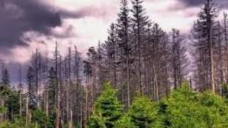 acid rain effects on forest  shocking  video