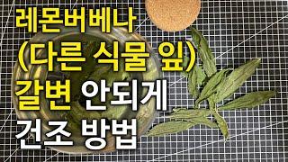 레몬버베나와 다른 식물 잎 갈변 안되게 하는 ᄀ…