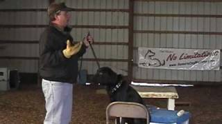Hunting Dog Training - Teach Your Dog To Retrieve