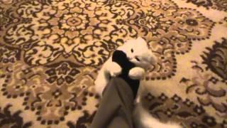 Смешной кот и странный хозяин. Смешное видео. (Funny сat and his strange owner)