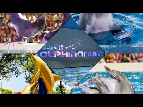 Dolphin & Seal Show @ Dubai Dolphinarium, Creek Park