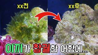 해초급 이끼마저 박멸하는 토종xx의 위력 (feat.역마살낀말미잘) [TV생물도감]