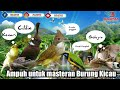 Masteran Burung Lomba  Mp3 - Mp4 Download