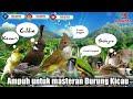 Suara Burung Masteran Terbaik Suara Jernih Cepat Masuk Masteran Murai Kacer Cucak Hijau Favorit  Mp3 - Mp4 Download