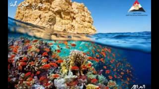 فيديو..مركز معلومات مجلس الوزراء يطلق مبادرة لتنشيط السياحة الداخلية