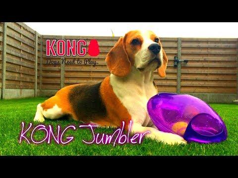 Beagle Louie does Dog Toy Review : KONG JUMBLER