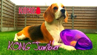 "Dog Toy Critic ""louie The Beagle"" Episode #4 :kong Jumbler"