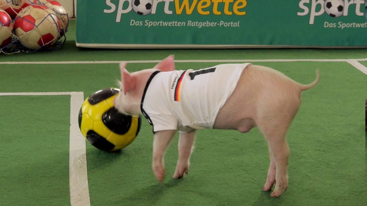 Sportwette Net