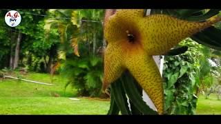 Honduras - Frutas Tropicales - Para los hondureños en España