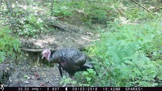 Scenes from the Forest Park trail cam