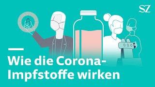 Wie die Corona-Impfstoffe im Körper wirken