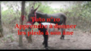 Tuto n°10 : comment apprendre à donner les pieds à son âne