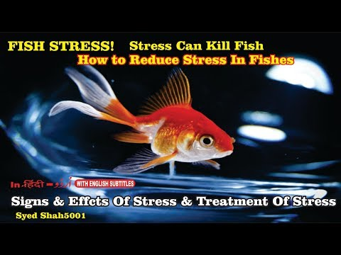 How To Reduce Fish Stress - 3 Signs Your Fish Is Going To Die