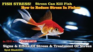 How to reduce Fish Stress # TOP 3 signs your fish is going to die #Stress is the Silent killer