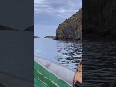The Stansbury Show - Moose Goes Cliff Diving