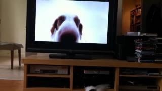 Собака смотрит телевизор!