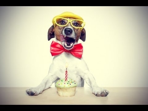 joyeux anniversaire chien