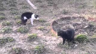 коты помойные