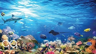 Beautiful Aquarium & Relaxing Music – Study, Reading, Sleep, Yoga – Soothing Ambient Sounds