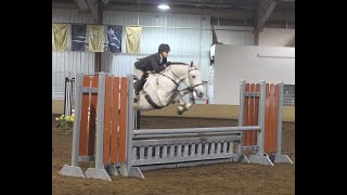 Capps Irish Charmer - Rated Hunters - Imported, Approved Irish Draught Stallion