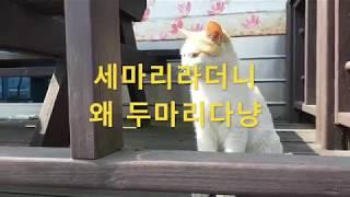 곡성 기차펜션에서 만난 고양이 삼형제