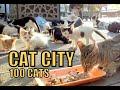 Feeding 100 Stray Cats - Turkey's Cat Island (Cute Cats - Cute Kittens)