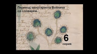 Voynich manuscript, translated from the dictionary  6 s