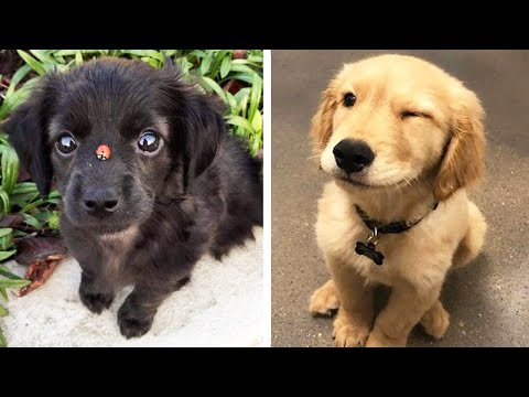 Funny Dogs Videos Compilation cute moment of the animals - Cutest Puppies #1