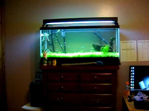 New 30 gallon planted fish tank 11 20 2009 youtube for 30 gallon fish tank