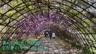 Music, Lyrics, Arrangement, Vocals: Sukimashikanai Instruments: Studio One Photo: Sukimashikanai (taken in Kawachi Wisteria Garden, Japan)