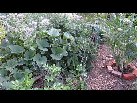 Hugelkultur Abundance! 5 Year Old Mound | Update & Results
