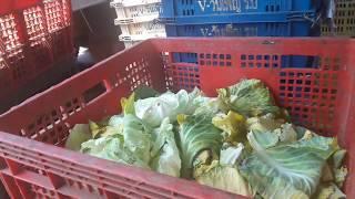 Nco Official : เว้า!!!อาหารปลาอย่างดี อาหารไส้เดือนก็แจ๋ว ลดต้นทุนอาหารเม็ดมากมาย