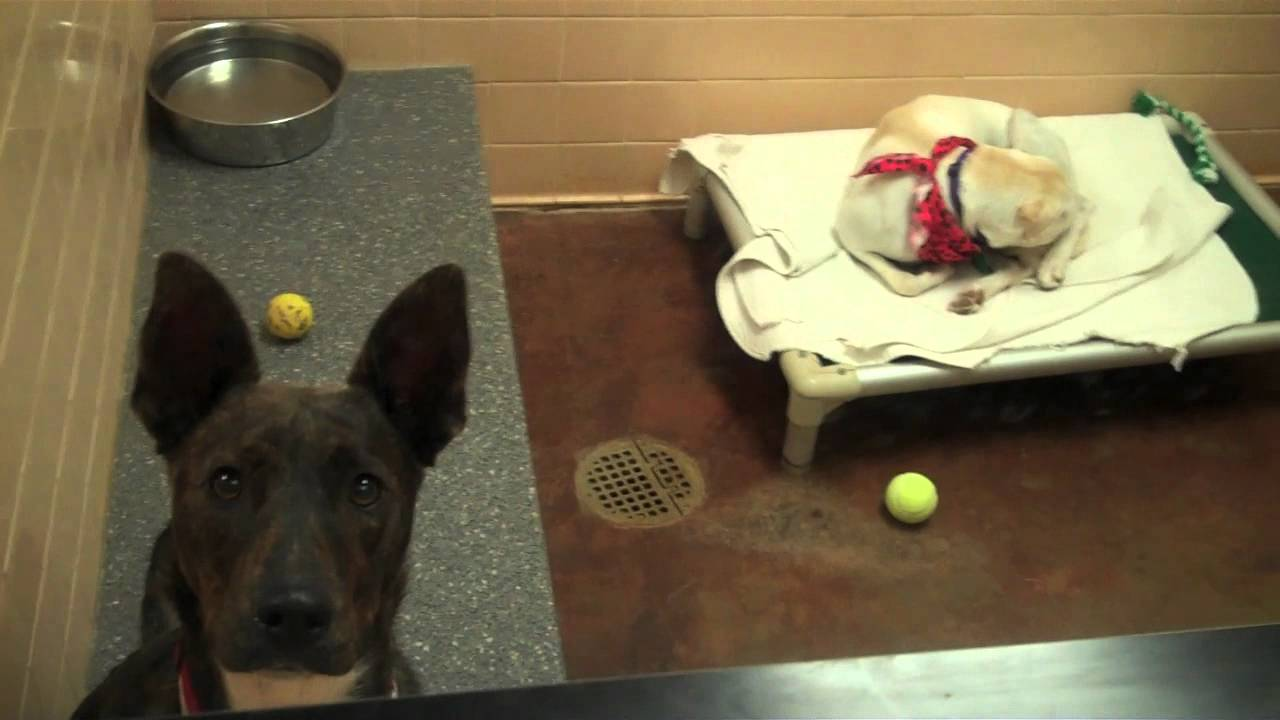 Shelter Program | Calm Shelter/ Rescue Animals with a Free