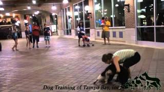 Pet Tricks - Dog Training Of Tampa Bay