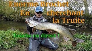 Énorme Brochet en cherchant la Truite !