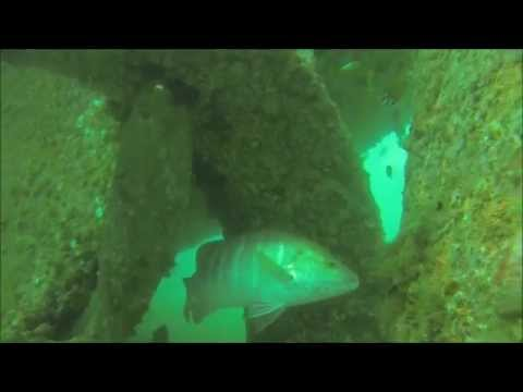 Angola Diving in sunken ship big snapper and Groupers great footage