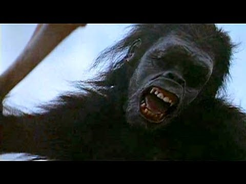 2001 A Space Odyssey - Ape and Bones