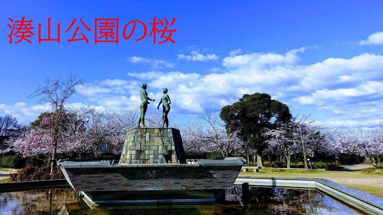 湊山公園の桜 - YouTube