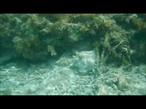 Dry Tortugas National Park: Snorkeling off Garden Key