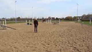 Dressuur Middendraf Astra - Sandy Stevens