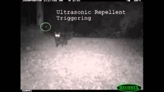 Ultrasonic Cat Repeller Test