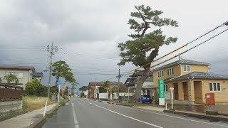 江戸時代の街道の名残を伝える旧加賀街道の松並木。2018年暮れにそのう...