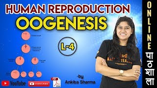 Oogenesis ANIMATION | Human Reproduction | Chapter 3 Biology Class 12 | NEET 2020 - 21 Exam