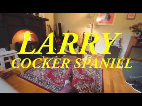 Larry - Cocker Spaniel (Official Video)